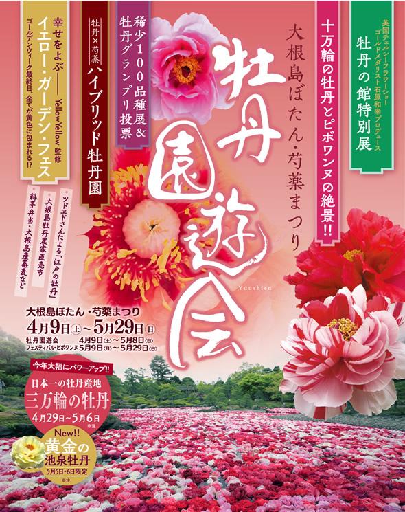大根島ぼたん・芍薬まつり2016 開催中!