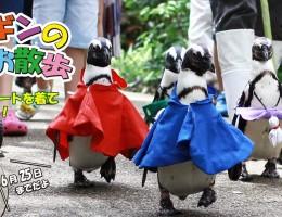 ♪松江フォーゲルパーク ペンギンのお散歩衣装は、ただいまレインコート!!