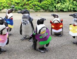 松江フォーゲルパーク☆ペンギンのお散歩