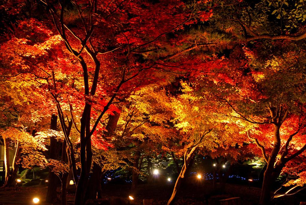 紅葉の由志園 夜間観賞会 紅葉ライトアップ