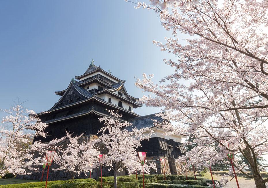 松江城山公園の桜